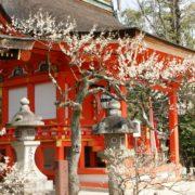 京都梅のイメージ