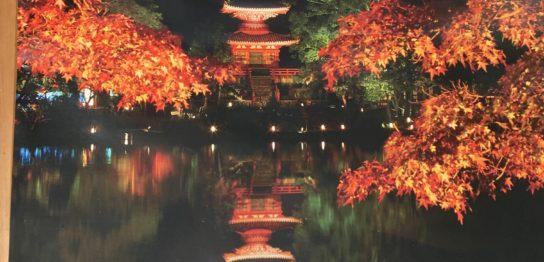 大覚寺 真紅の水鏡